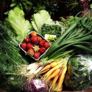 Organic Farming: Fresh Fare From Local Growers Goes Online