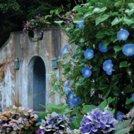 Harmonia: Landscape Designer Roxine Brown