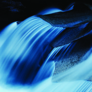 Water Rites