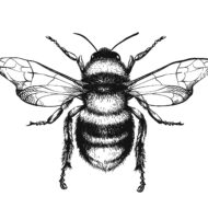 The Plight of the Bees